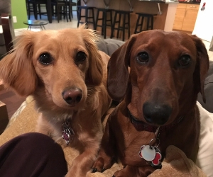 Casey & Finnigan's Fantastic Furry Friends Fund
